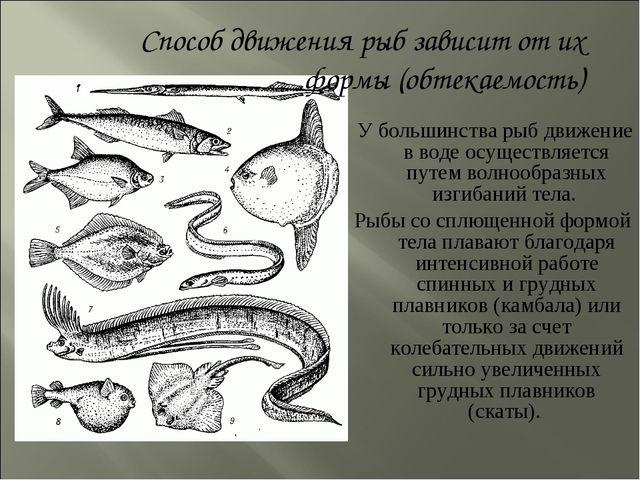 У большинства рыб движение в воде осуществляется путем волнообразных изгибан...
