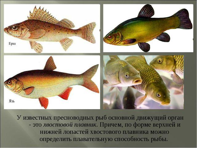 У известных пресноводных рыб основной движущий орган - это хвостовой плавник....