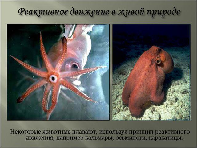 Некоторые животные плавают, используя принцип реактивного движения, например...