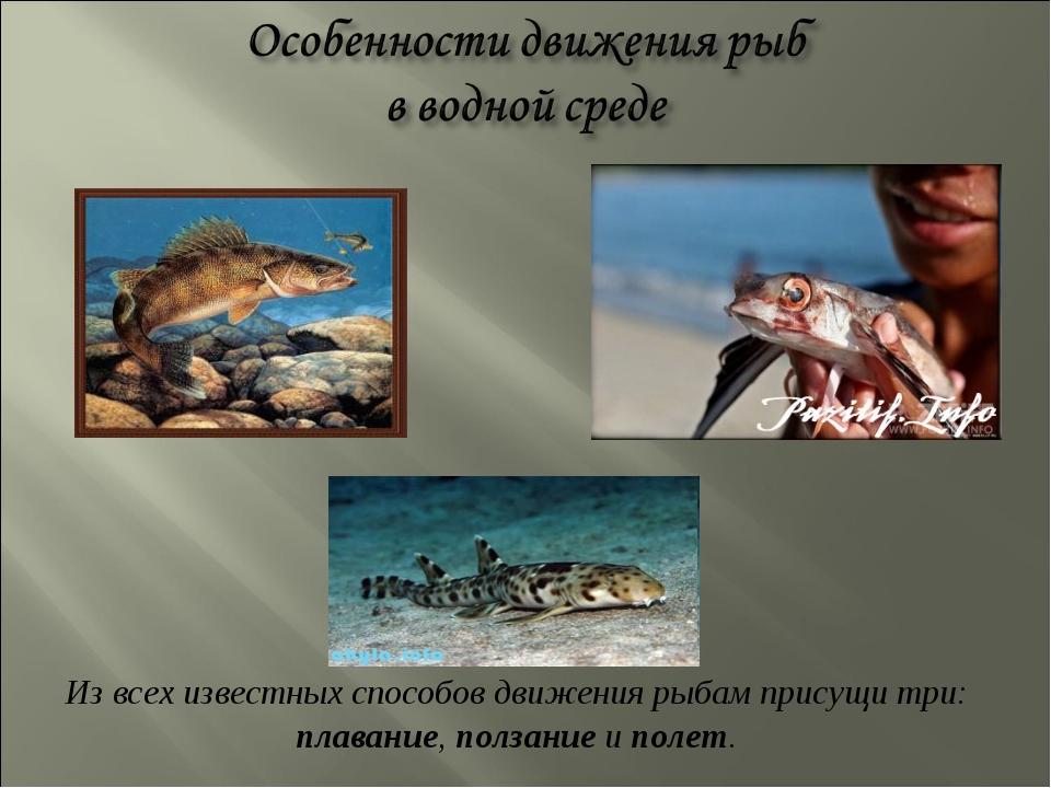 Из всех известных способов движения рыбам присущи три: плавание, ползание и п...