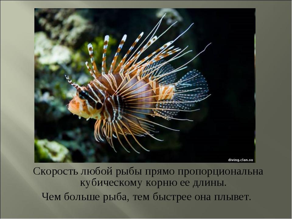 Скорость любой рыбы прямо пропорциональна кубическому корню ее длины. Чем бол...
