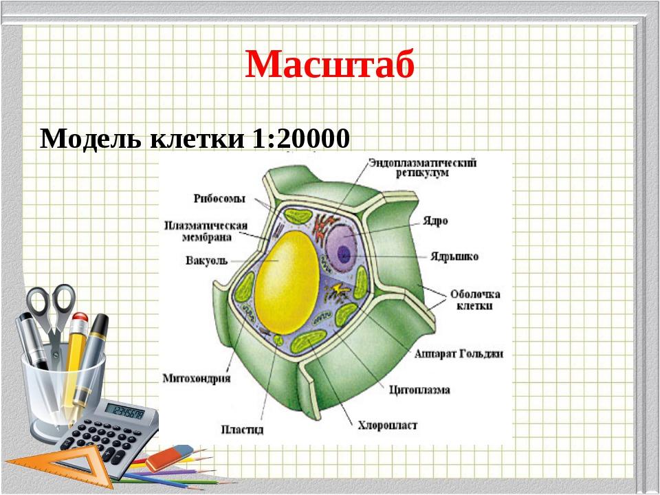 Масштаб Модель клетки 1:20000