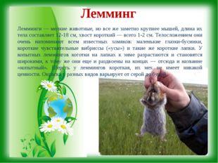 Лемминг Лемминги — мелкие животные, но все же заметно крупнее мышей, длина и
