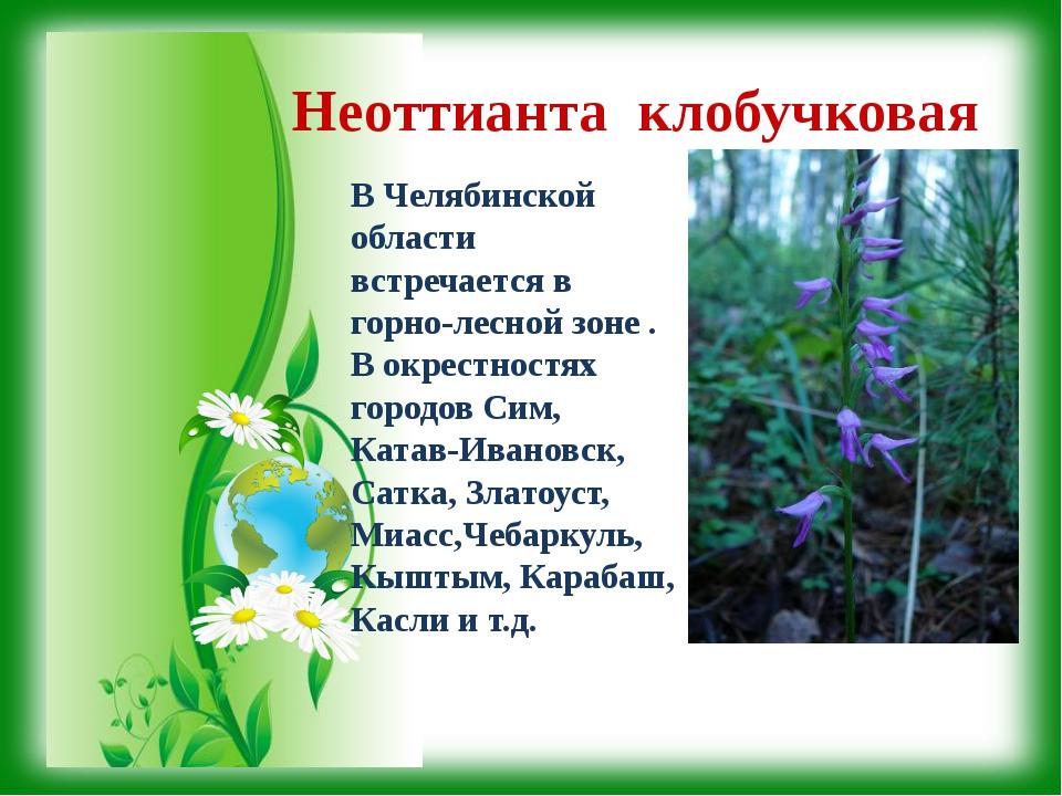 Неоттианта клобучковая В Челябинской области встречается в горно-лесной зоне...