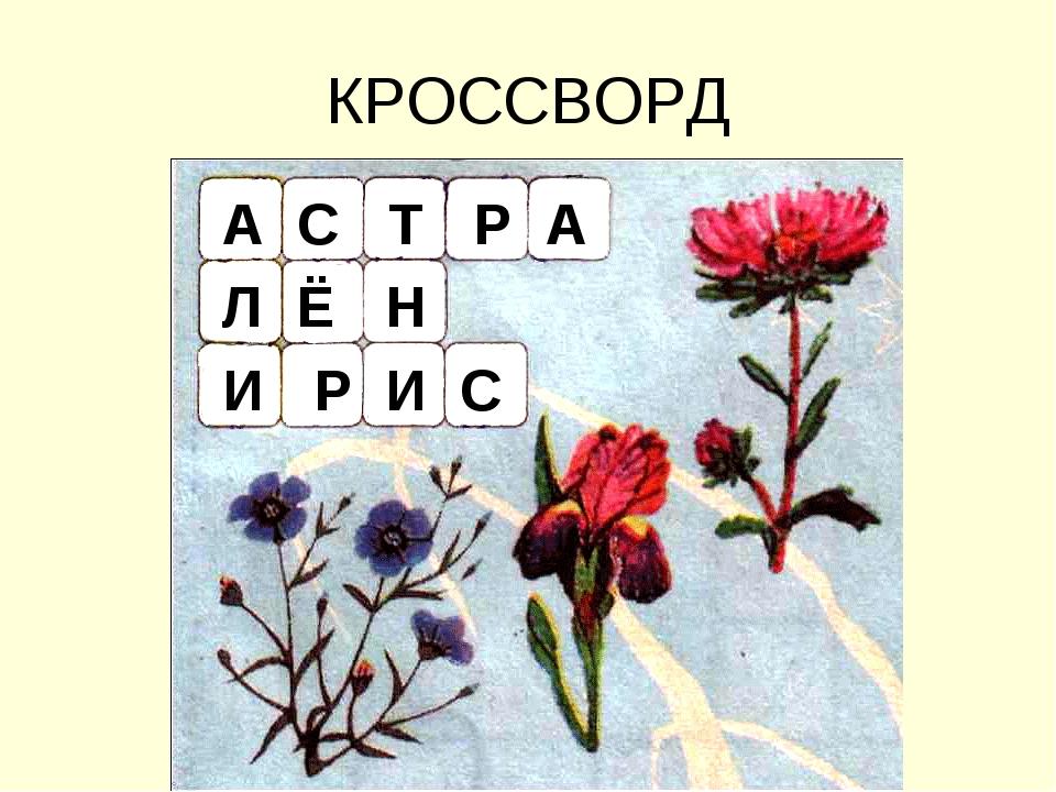 КРОССВОРД А С Т Р А Л Ё Н И Р И С