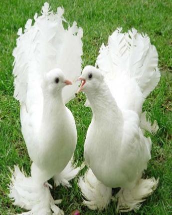 22_pigeons.jpg