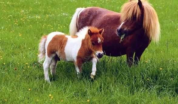 http://www.zastavki.com/pictures/1024x600/2005/Animals___Horses__001869_27.jpg