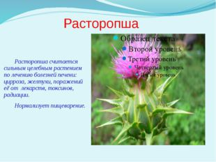 Расторопша Расторопша считается сильным целебным растением по лечению болезне