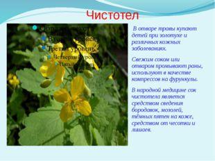 Чистотел В отваре травы купают детей при золотухе и различных кожных заболева