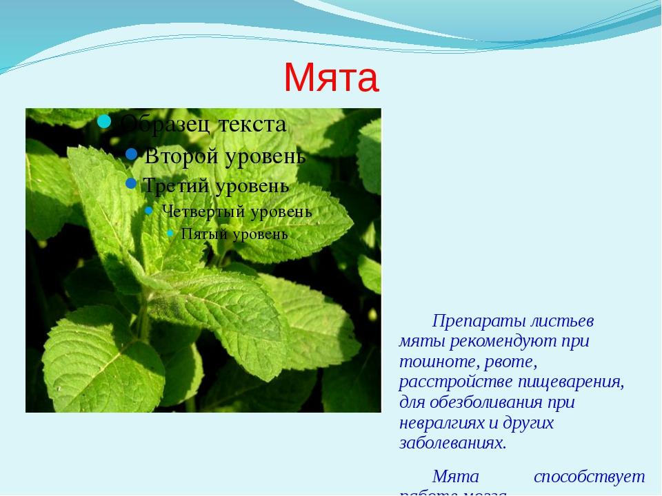 Мята Препараты листьев мяты рекомендуют при тошноте, рвоте, расстройстве пище...