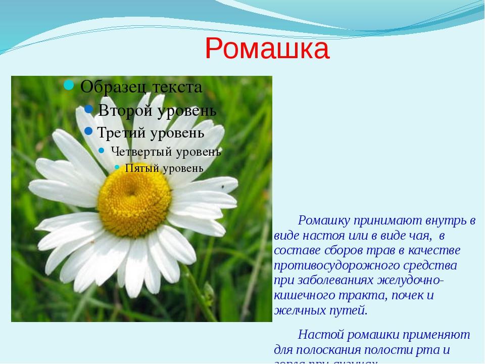 Ромашка Ромашку принимают внутрь в виде настоя или в виде чая, в составе сбор...