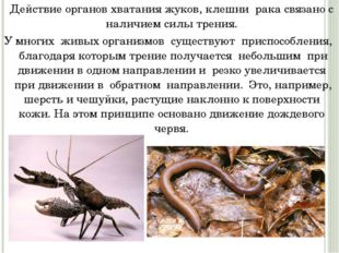 Действие органов хватания жуков, клешни рака связано с наличием силы трения