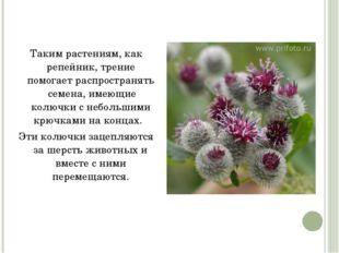 Таким растениям, как репейник, трение помогает распространять семена, имеющи