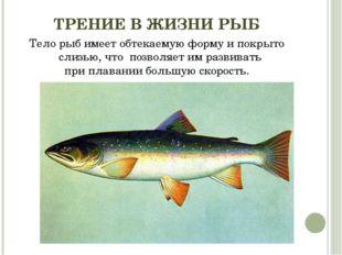 ТРЕНИЕ В ЖИЗНИ РЫБ Тело рыб имеет обтекаемую форму и покрыто слизью, что поз