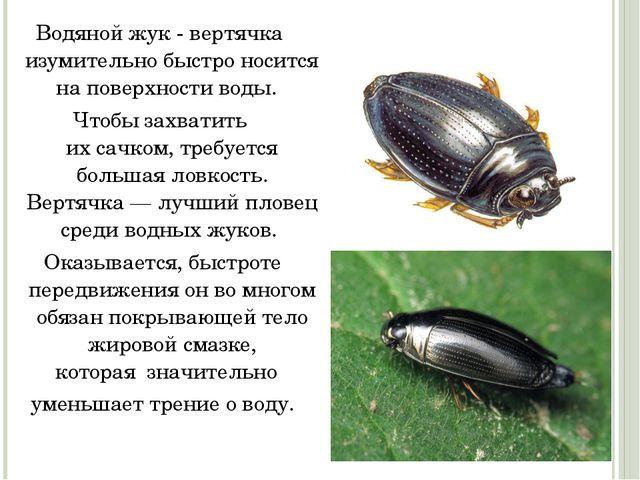 Водяной жук - вертячка изумительно быстро носится на поверхности воды. Чтоб...