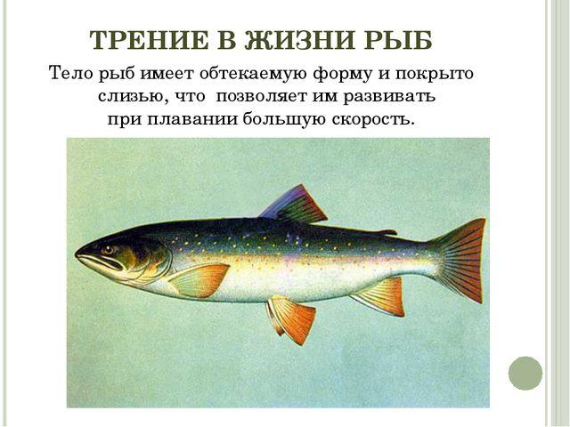 ТРЕНИЕ В ЖИЗНИ РЫБ Тело рыб имеет обтекаемую форму и покрыто слизью, что поз...