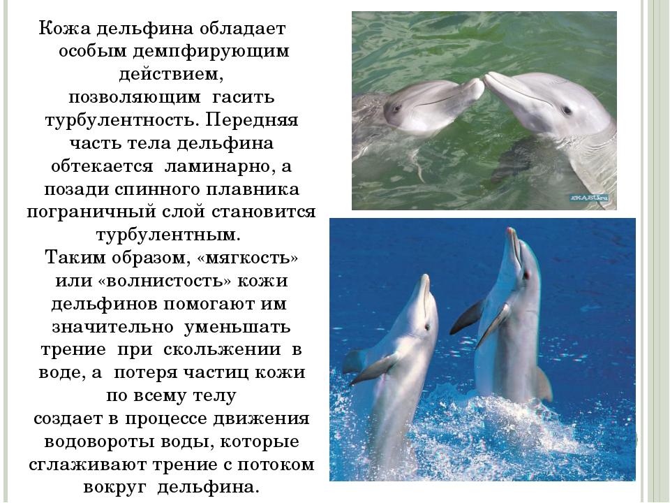 Кожа дельфина обладает особым демпфирующим действием, позволяющим гасить ту...