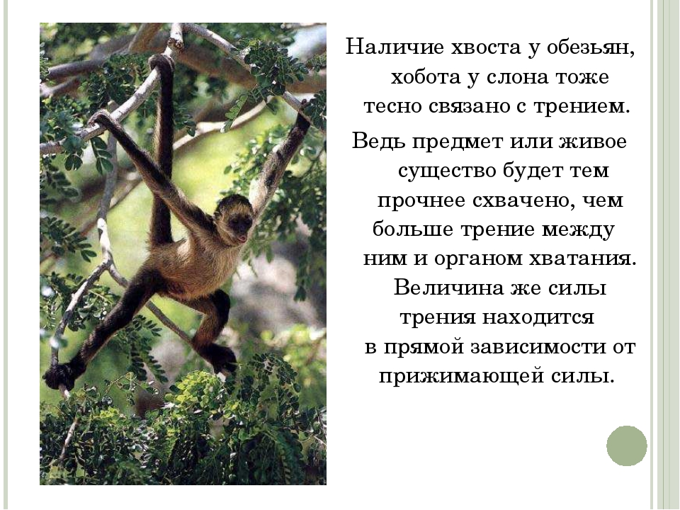 Наличие хвоста у обезьян, хобота услона тоже тесно связано с трением. Ведь п...