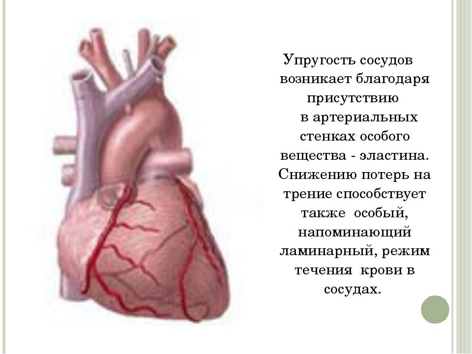Упрyгость сосудов возникает блaгодаря присутствию  в артериальных стенках ос...