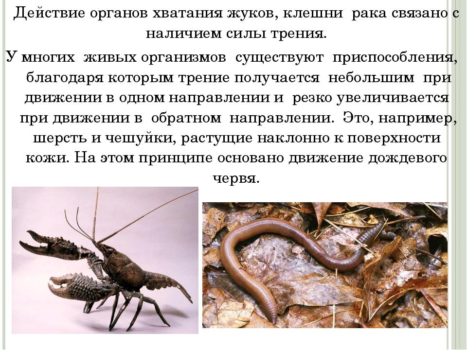 Действие органов хватания жуков, клешни рака связано с наличием силы трения...