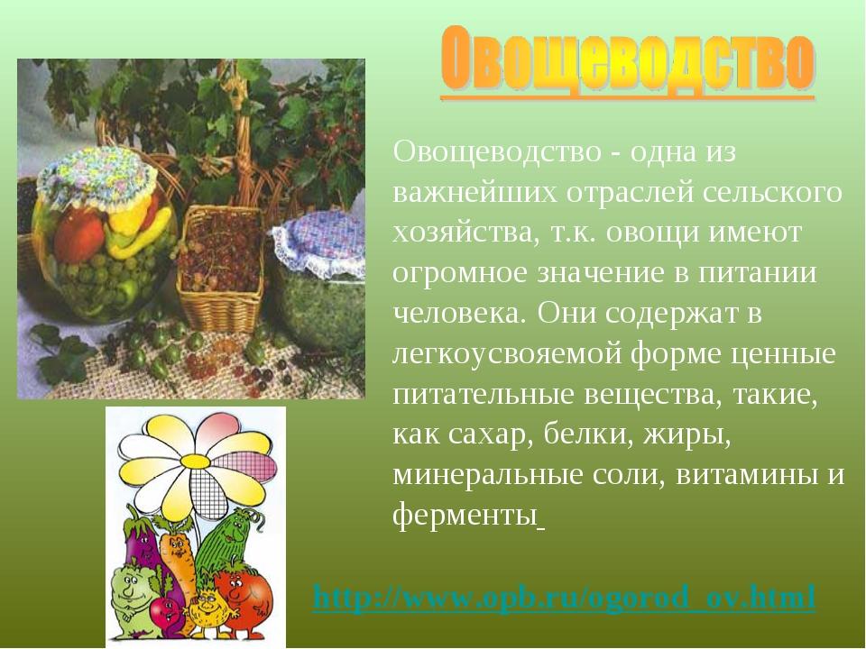 Овощеводство - одна из важнейших отраслей сельского хозяйства, т.к. овощи име...