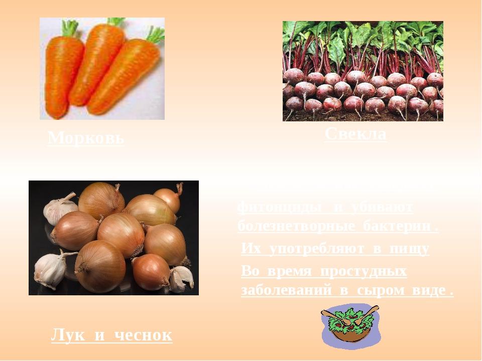 Морковь Свекла Лук и чеснок Лук и чеснок содержат фитонциды и убивают болезне...