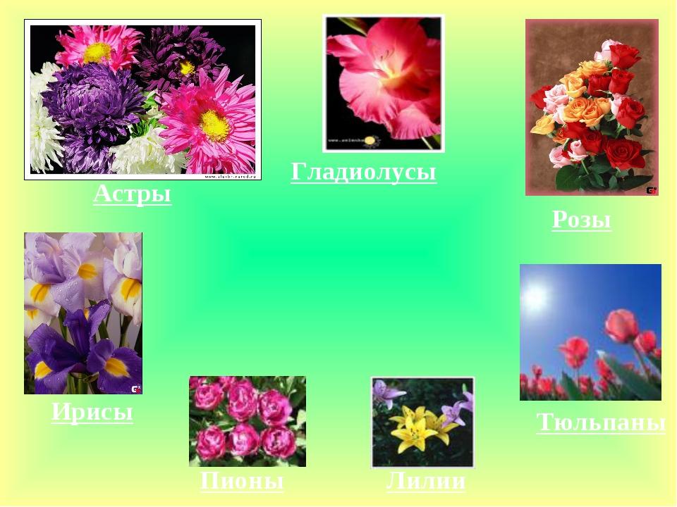Астры Гладиолусы Розы Ирисы Пионы Лилии Тюльпаны