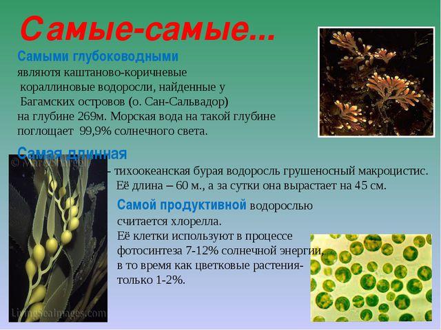 Самые-самые... Самыми глубоководными являютя каштаново-коричневые кораллиновы...