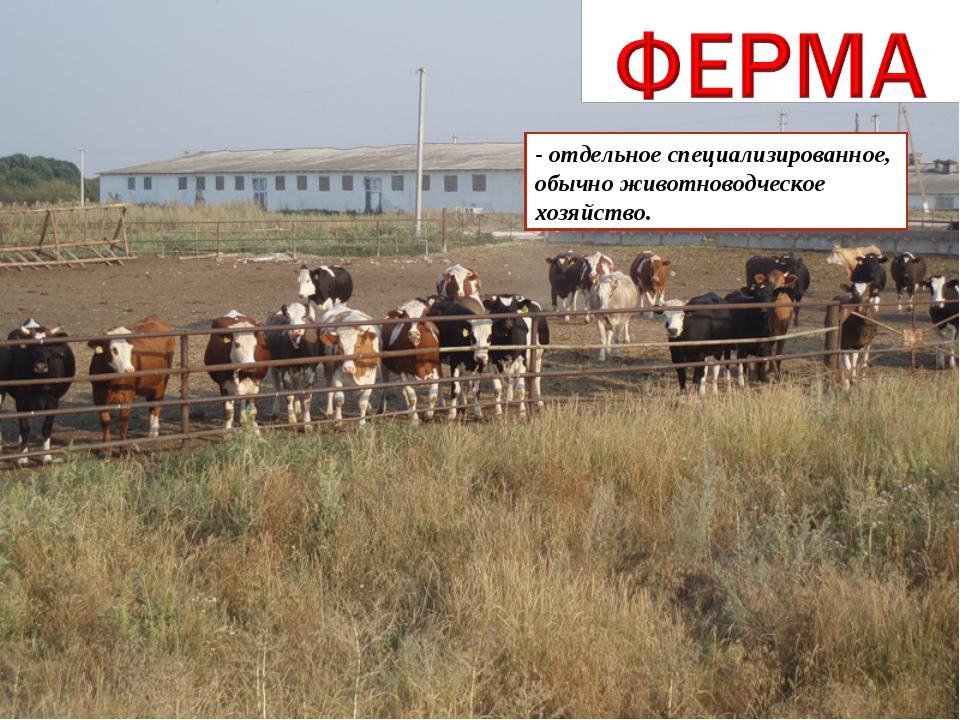 - отдельное специализированное, обычно животноводческое хозяйство.