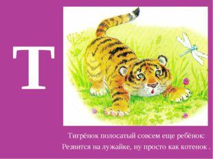 Т Тигрёнок полосатый совсем еще ребёнок: Резвится на лужайке, ну просто как к