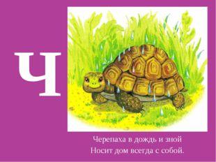 Ч Черепаха в дождь и зной Носит дом всегда с собой.