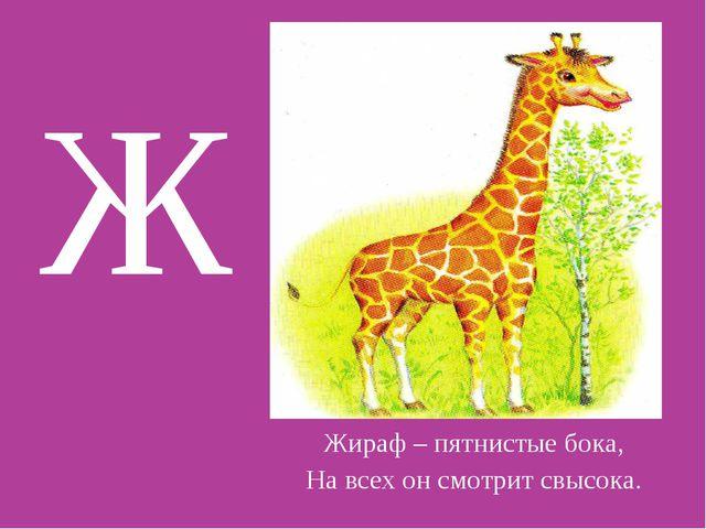 Ж Жираф – пятнистые бока, На всех он смотрит свысока.