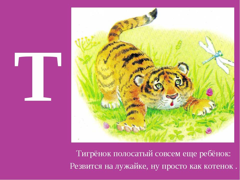 Т Тигрёнок полосатый совсем еще ребёнок: Резвится на лужайке, ну просто как к...