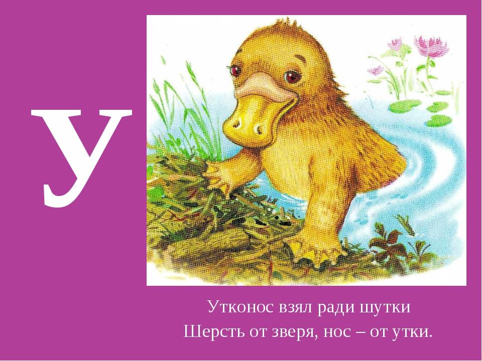 У Утконос взял ради шутки Шерсть от зверя, нос – от утки.