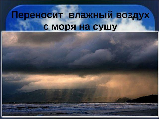 Переносит влажный воздух с моря на сушу