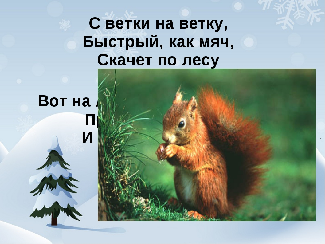 С ветки на ветку, Быстрый, как мяч, Скачет по лесу Рыжий циркач Вот на лету...