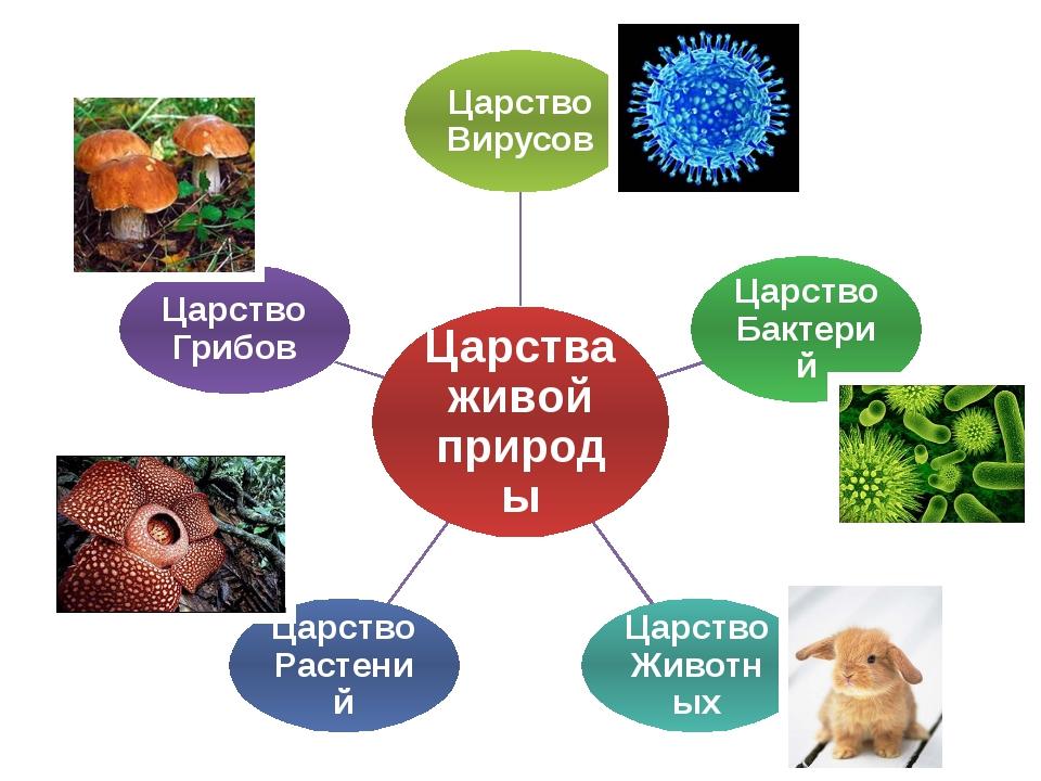 Бактерии, грибы, растения