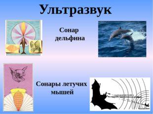 Ультразвук Сонар дельфина Сонары летучих мышей