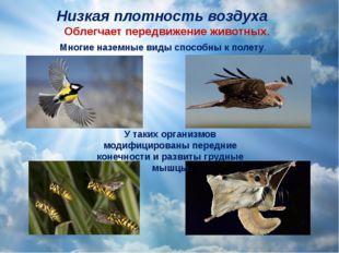 Низкая плотность воздуха Облегчает передвижение животных. Многие наземные вид