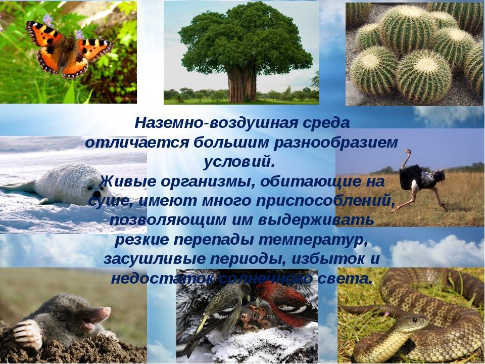 Наземно-воздушная среда отличается большим разнообразием условий. Живые орган...