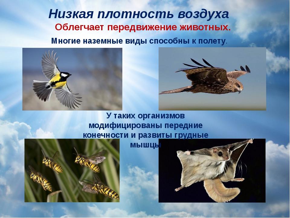Низкая плотность воздуха Облегчает передвижение животных. Многие наземные вид...