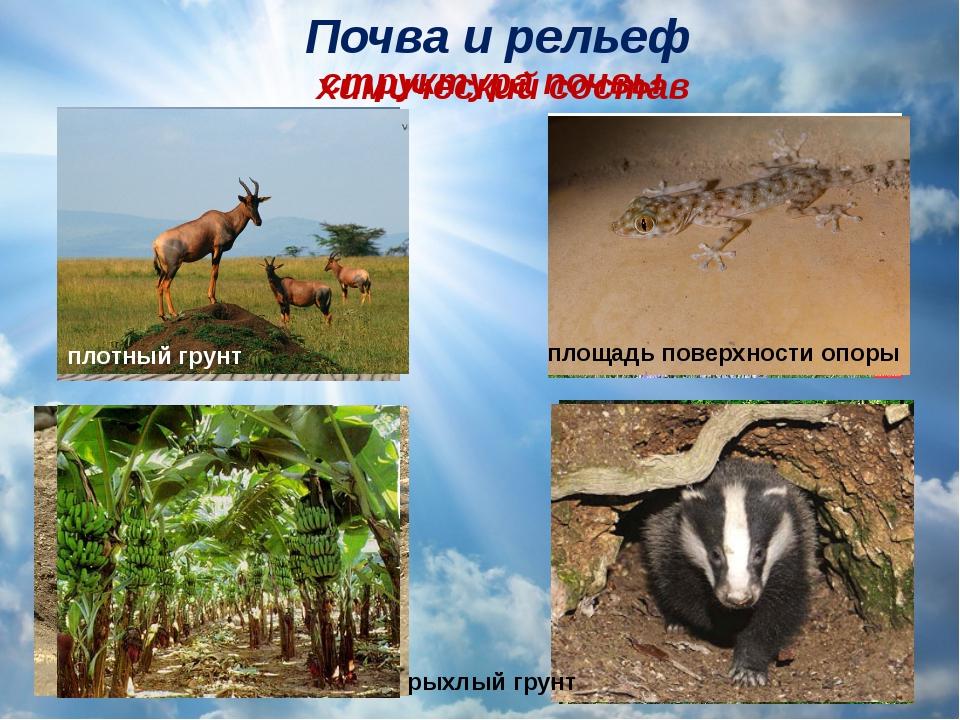 Почва ирельеф химический состав структура почвы рыхлый грунт плотный грунт п...