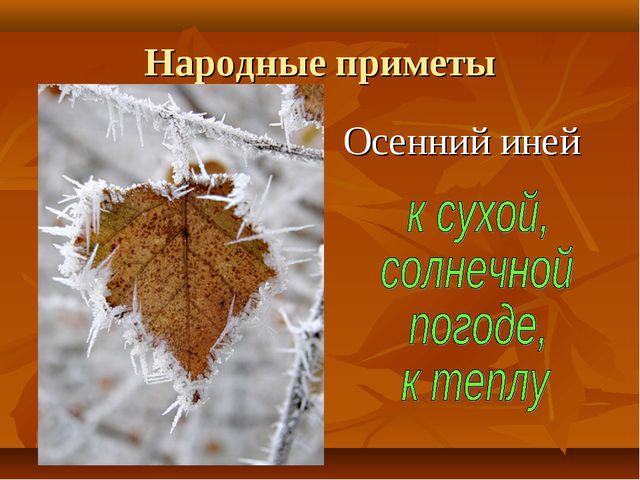 Народные приметы Осенний иней