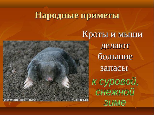 Народные приметы Кроты и мыши делают большие запасы