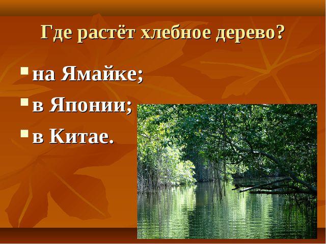 Где растёт хлебное дерево? на Ямайке; в Японии; в Китае.