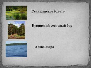 Селищенское болото Кувинский сосновый бор Адово озеро