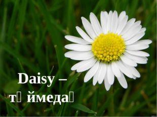 Daisy – түймедақ