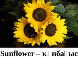 Sunflower – күнбағыс