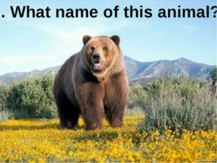 6. What name of this animal?