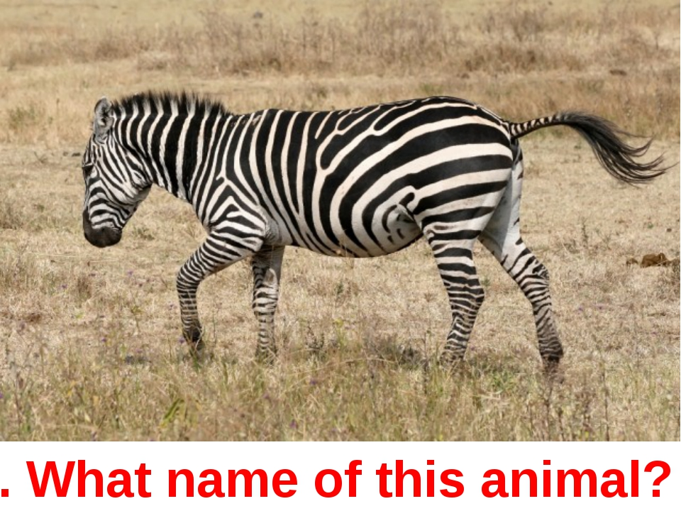 5. What name of this animal?